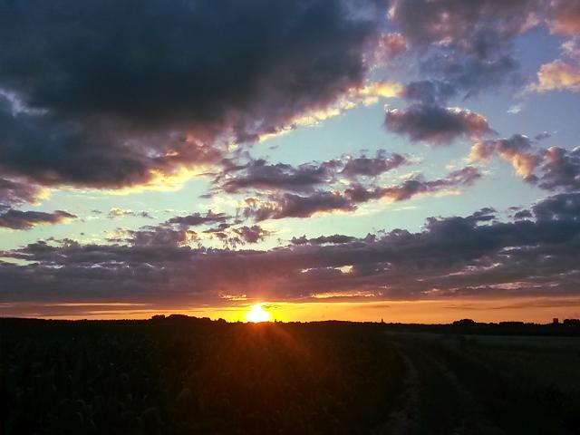 Veld bij zonsondergang